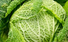 Free Savoy Cabbage Stock Photos - 18542803