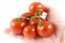 Free Red Fresh Bio Tomato Royalty Free Stock Photo - 18544115