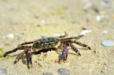 Free Crab On The Beach Royalty Free Stock Images - 18544989