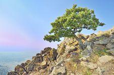 Free Tree On Rocks Royalty Free Stock Photography - 18545017