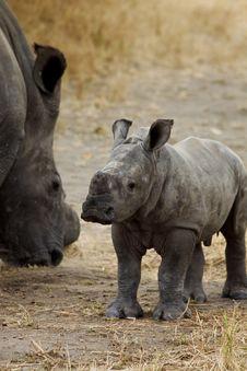 Rhino Baby Stock Photo
