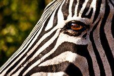 Eye Of The Zebra Royalty Free Stock Photography