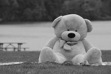 Free Bear Sitting On Meadow Royalty Free Stock Image - 18546236