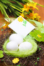 Free Nest With Eggs Royalty Free Stock Image - 18556586