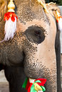 Free Elephant Face Close Up Stock Images - 18557904
