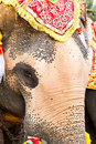 Free Elephant Face Close Up Stock Photo - 18557980