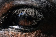 Free Eye Of A Mule Royalty Free Stock Photos - 18551118