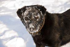 Free Portrait Of Black Dog Stock Photo - 18552430