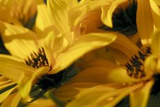 Free Inside A Yellow Flower Royalty Free Stock Images - 18552839