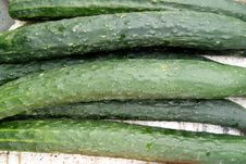 Free Cucumber Stock Photography - 18553752