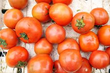 Free Tomatoes Royalty Free Stock Images - 18553769