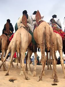 Free Nomad Riders On Camels At Desert Festival Stock Image - 18554361