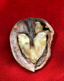 Free Love Nut Stock Photography - 18554472