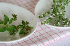 Free Oregano, Thyme Royalty Free Stock Photography - 18555867