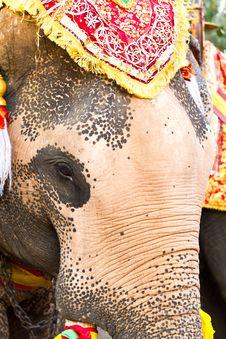 Free Elephant Face Close Up Stock Photo - 18557980