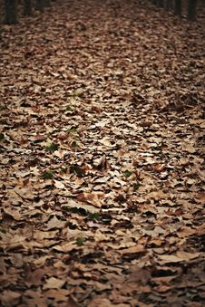 Free Brown Leaves On The Ground Royalty Free Stock Image - 18558996