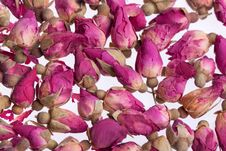 Buds Of Dried Roses Stock Photos
