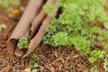 Free Tree Bark And A Plant Royalty Free Stock Photos - 18561248
