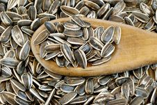 Free Sunflower Seeds Stock Photography - 18561972