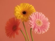 Free Flowers Stock Images - 18562464