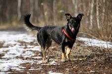 Free Doggy Stock Photos - 18566033