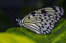 Free Rice Paper Butterfly Stock Photo - 18568780