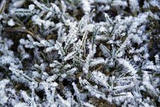 Free Frozen Vegetation Stock Photos - 18573623