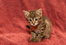 Free Small Tabby Kitten On A Brown Stock Photos - 18578523