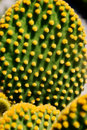 Free Cactus Closeup Stock Photos - 18585023