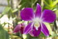 Free Orchid Flower Royalty Free Stock Image - 18586766