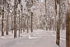 Free Winter Time In The Forest Stock Image - 18580421