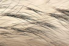 Free Animal Fur Texture Background Stock Photos - 18580633