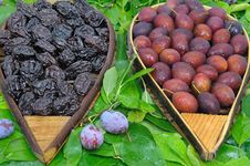 Free Plum Four Royalty Free Stock Images - 18582359