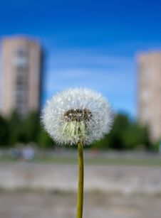 Free Dandelion Stock Images - 18582664