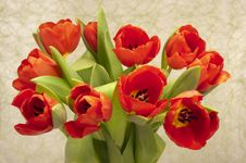 Free Easter Tulip Bunch Royalty Free Stock Photo - 18584205