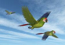 Free Military Macaws In Flight Stock Images - 18587174