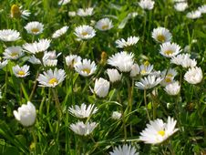 Free Meadow With Flowers Royalty Free Stock Photos - 18588538