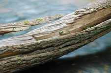 Free Tree Trunk Over Water Stock Image - 18589021