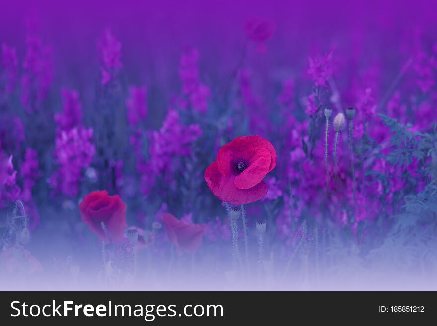 Beautiful Blue Nature Background.Abstract Wallpaper.Macro Photography.Floral Art Design.Field of Poppies.Summer Poppy Flowers.