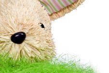 Cute Bunny Royalty Free Stock Image