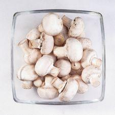 Free Mushrooms Stock Images - 18591884