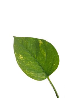 Free Part Of A Wet Green Leaf Isolated Over White Stock Images - 18594764