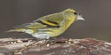 Free Little Bird Stock Photo - 18596800