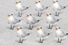 Free Pattern Of Terns Stock Photography - 18598362