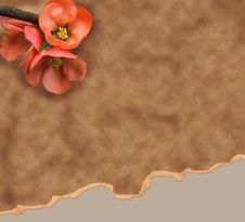 Free Old Paper Background With Red Flower Royalty Free Stock Photo - 18598505