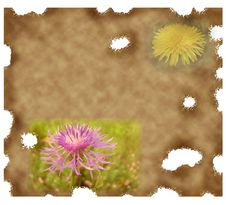 Free Old Paper Background With Dandelion Royalty Free Stock Images - 18598569
