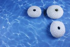 Free Three Sea Shells Stock Image - 18598851
