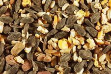 Free Bird Seed Stock Photo - 18599920