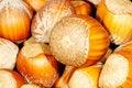 Free Hazel Nuts. Stock Photography - 1861002