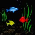 Free Aquarium Tropic Poster Royalty Free Stock Photo - 1862105